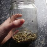 Wet seeds in a jar